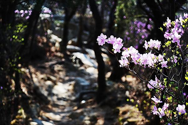 비봉능선의 꽃길