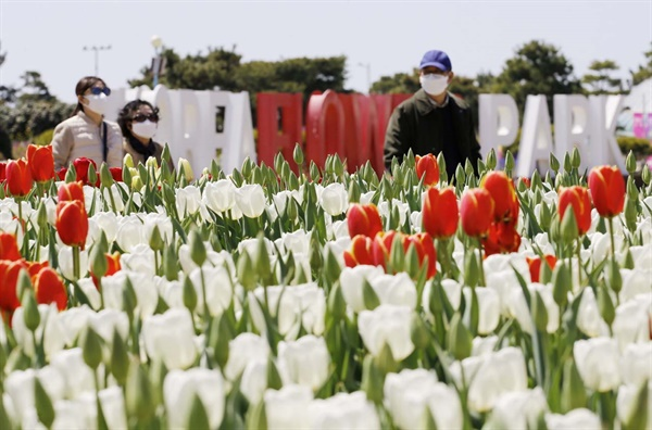 환상적인 튤립의 향연 안면도국제꽃박람회가 열린 충남 태안군 안면도의 코리아플라워파크에서는 지난 9일부터 5월 10일까지 태안 세계튤립꽃박람회가 열리고 있다. 사진은 개장 후 1주일이 지난 15일 튤립꽃축제장.