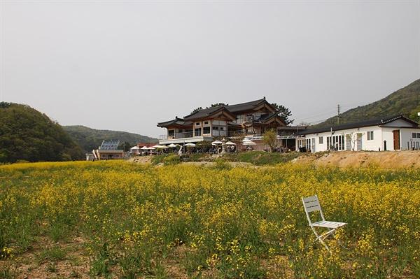 경주 보불로 하동저수지 유채꽃밭 모습