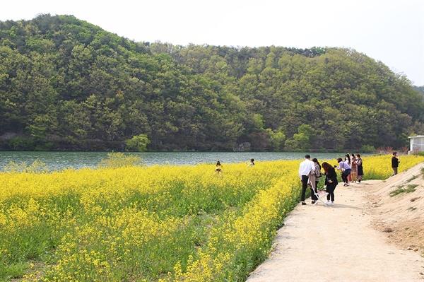 경주 하동저수지 유채꽃밭 주위 풍경