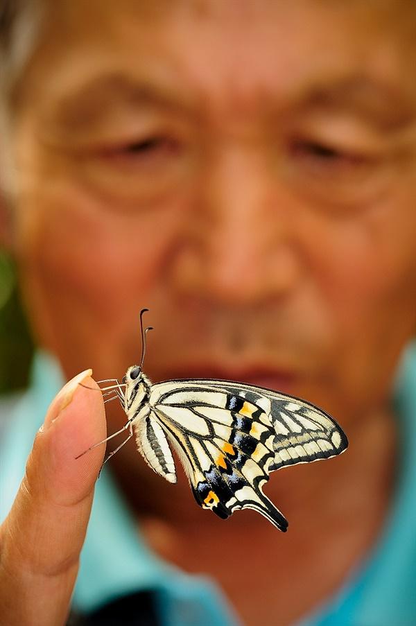 swallowtail 호랑나비