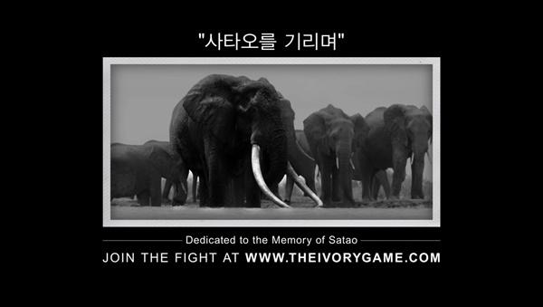 다큐멘터리 촬영 중 사망한 코끼리 사타오의 생전 모습(가운데)