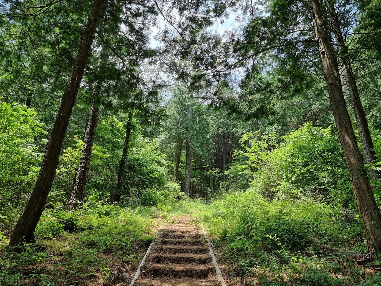 편백나무 숲길 입구