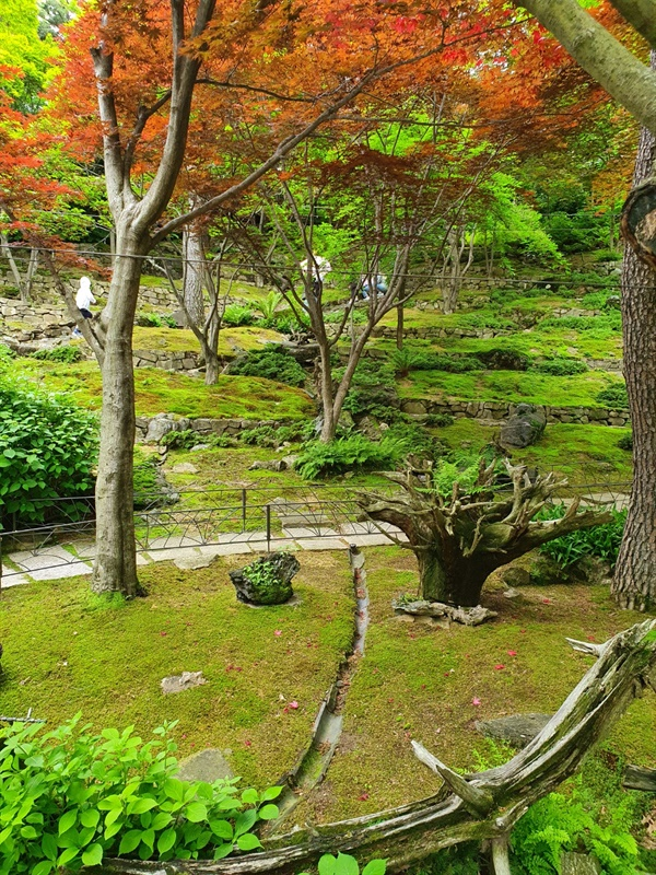 화담숲의 이끼원 국내 유일의 이끼 정원으로 계절마다 다른 풍경을 볼 수 있기로 유명하다