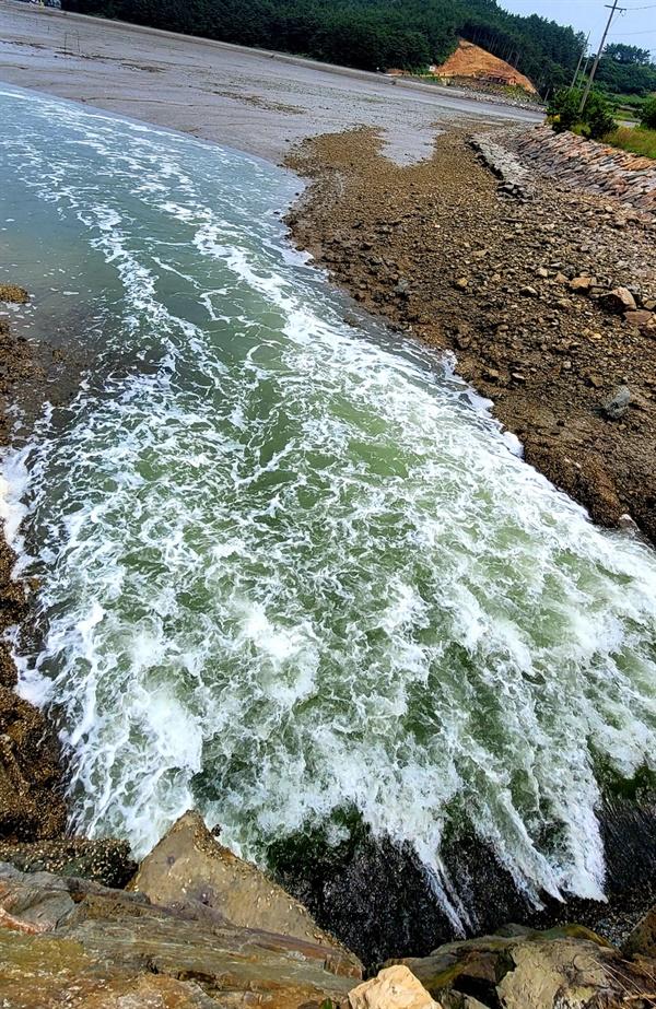 지난 14일 S양식장 인근 수로에서 바다로 오염이 의심되는 물이 방류디고 있다.