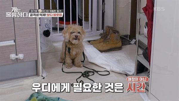 KBS2 <개는 훌륭하다> 한장면.