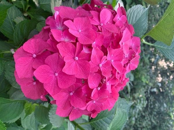 알칼리성 토양에서는 붉은 꽃이 피어납니다