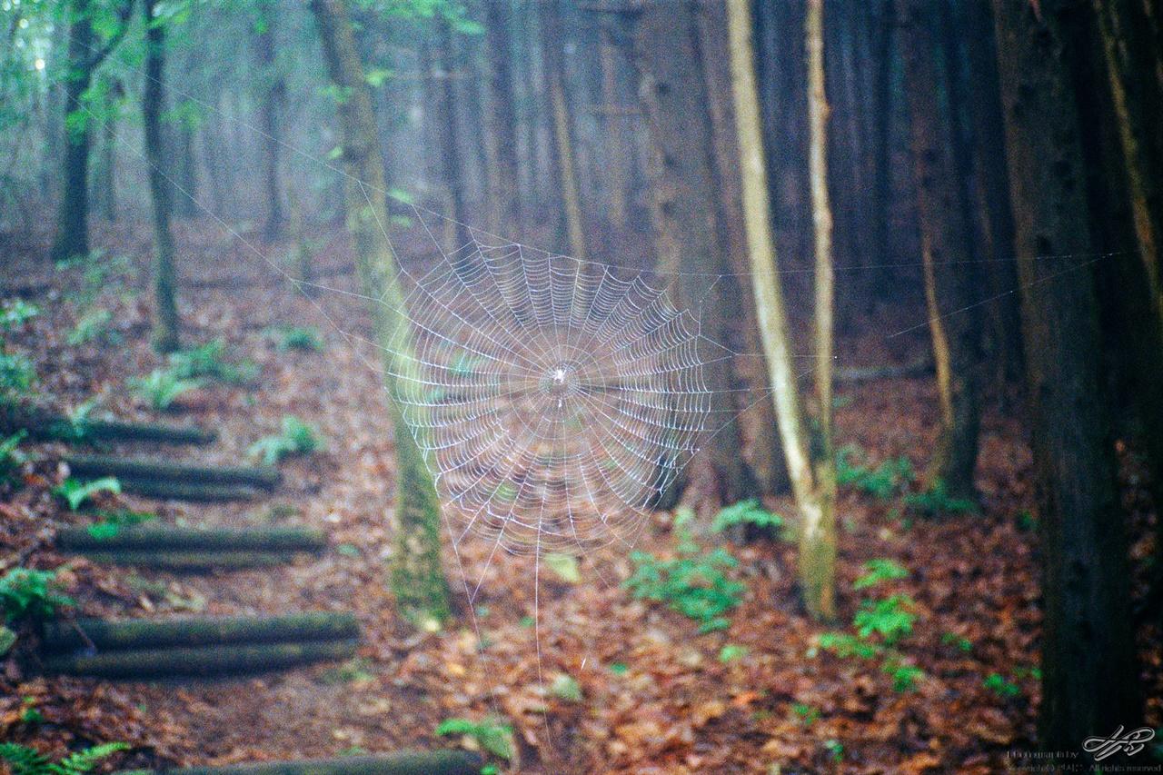 거미줄 (ProImage100)부지런한 거미가 새벽부터 지어놓은 집