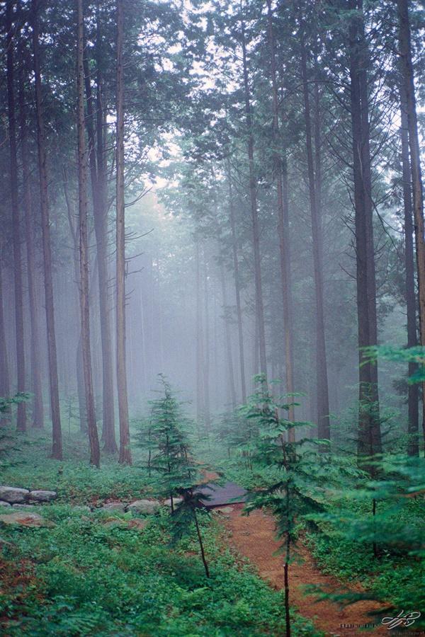 아침 숲 (ProImage100) 우유에 숲이 담긴 듯 포근한 느낌을 주는 아침 안개