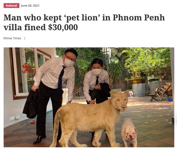 시내 주택가에서 사자를 애완동물로 몰래 키우다가 적발되어 벌금 3만불을 물게 되었다는 소식을 전한 현지 영자신문 <크메르 타임즈> 인터넷판 관련 기사.