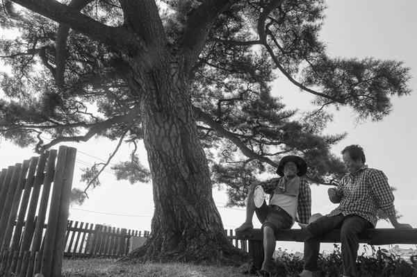 바닷가 짠 바람과 몇백년 세월을 담았낸 소나무 그늘아래 휴식은 언제나 달콤하다.