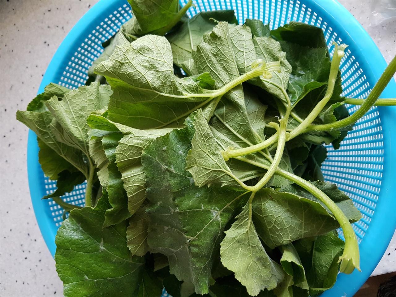 호박잎 껍질을 벗겨 놓은 호박잎