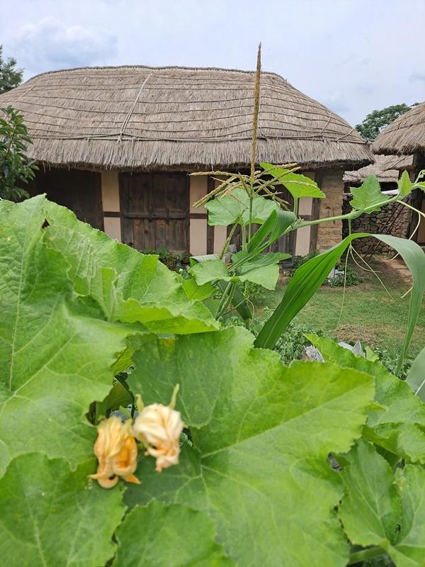 옛 모습 그대로를 간직하고 있는 이곳은 실제 사람들이 거주하고 있는 전통마을이다.