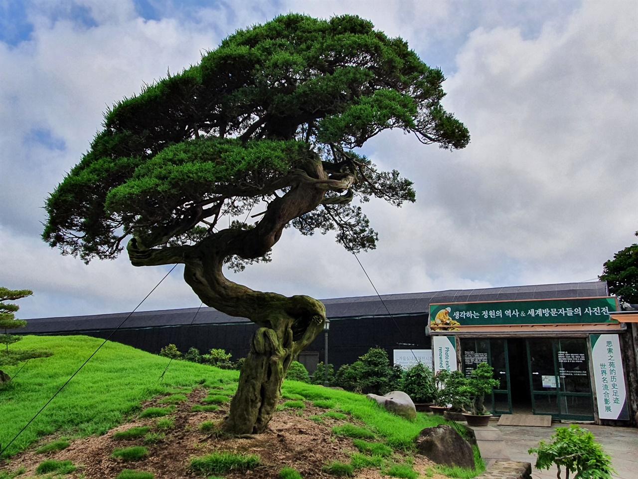 특히 일본인들이 극찬하는 700년 이상 된 향나무는  생각하는 정원의 보물과도 같은 나무다.