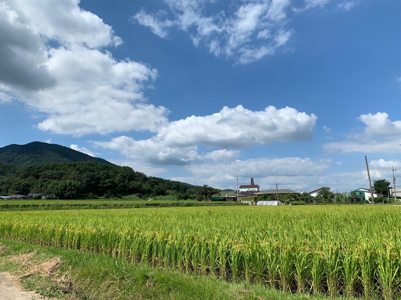 시골의 여름 마을의 풍경은 20년 전과 하나도 달라지지 않았다.