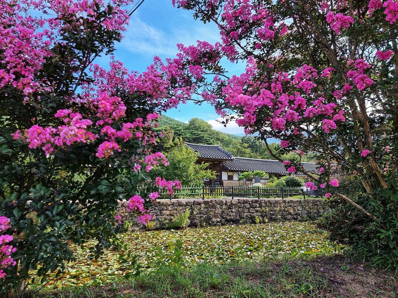 구례 운조루 고택 배롱나무꽃