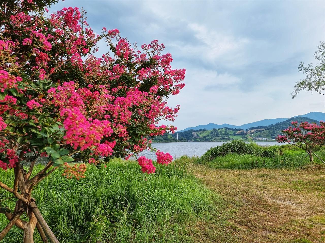 구례 지리산호수공원 배롱나무꽃