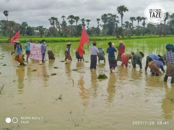 몽유와 농민들의 모내기 시위