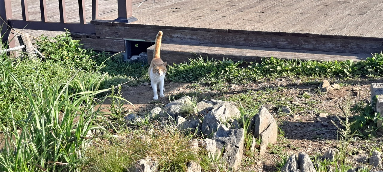 오서산 치즈 고양이