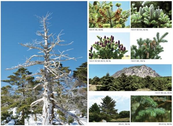 계절마다 다른 구상나무 꽃과 열매