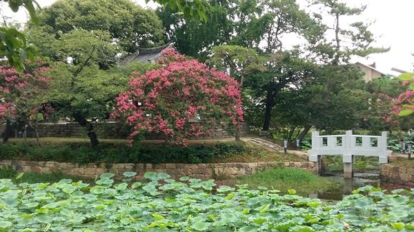 광주광역시 서구 8경 중 제1경으로 꼽히는 만귀정에 여름의 꽃 백일홍이 만발했다