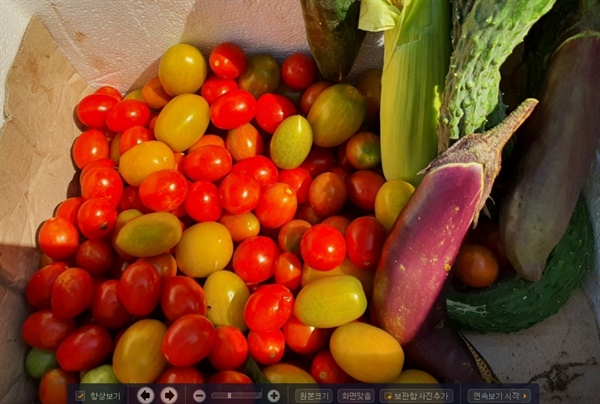 채소 꾸러미를 받았습니다. 지인 부부는 아침 일찍 새벽공기를 마시며 텃밭에 나가 직접 지은 채소를 수확해서 나눠주는 재미에 푹 빠졌습니다.