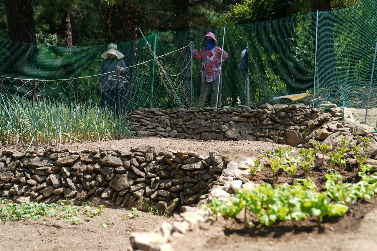 자매는 올봄부터 공주시 월성산 자락에서 텃밭 농사를 시작한 구순 어머니를 위해 무너진 돌담을 보수하고, 주변을 정리하고 있다.