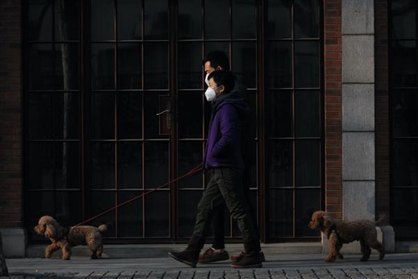 코로나 시대. 마스크를 쓴 보호자와 함께 산책하는 개들. 가족들이 코로나로 격리되거나 입원했을 때 이 개들은 어디서 돌봄을 받을 수 있을까.