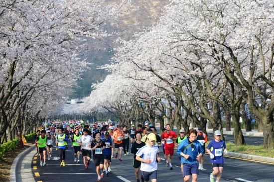 <figcaption>경주시가 내년부터 벚꽃마라톤대회를 개최하지 않기로 했다. 사진은 지난대회 출발모습.</figcaption>