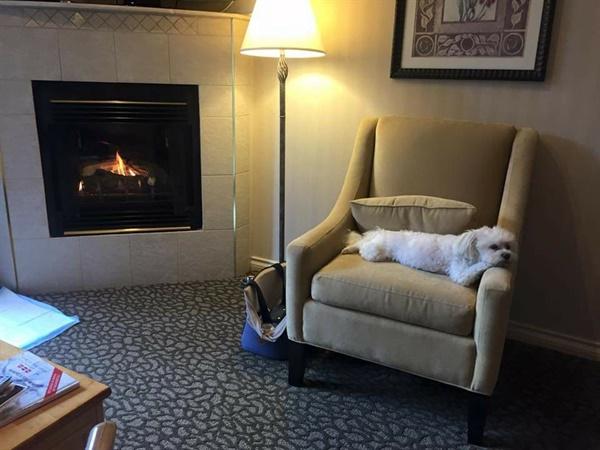 캐나다에서 은이는 웬만한 호텔들에서 추가 비용을 지불하고 함께 머무를 수 있었다. 휘슬러의 한 호텔에서 휴식을 취하고 있는 은이.