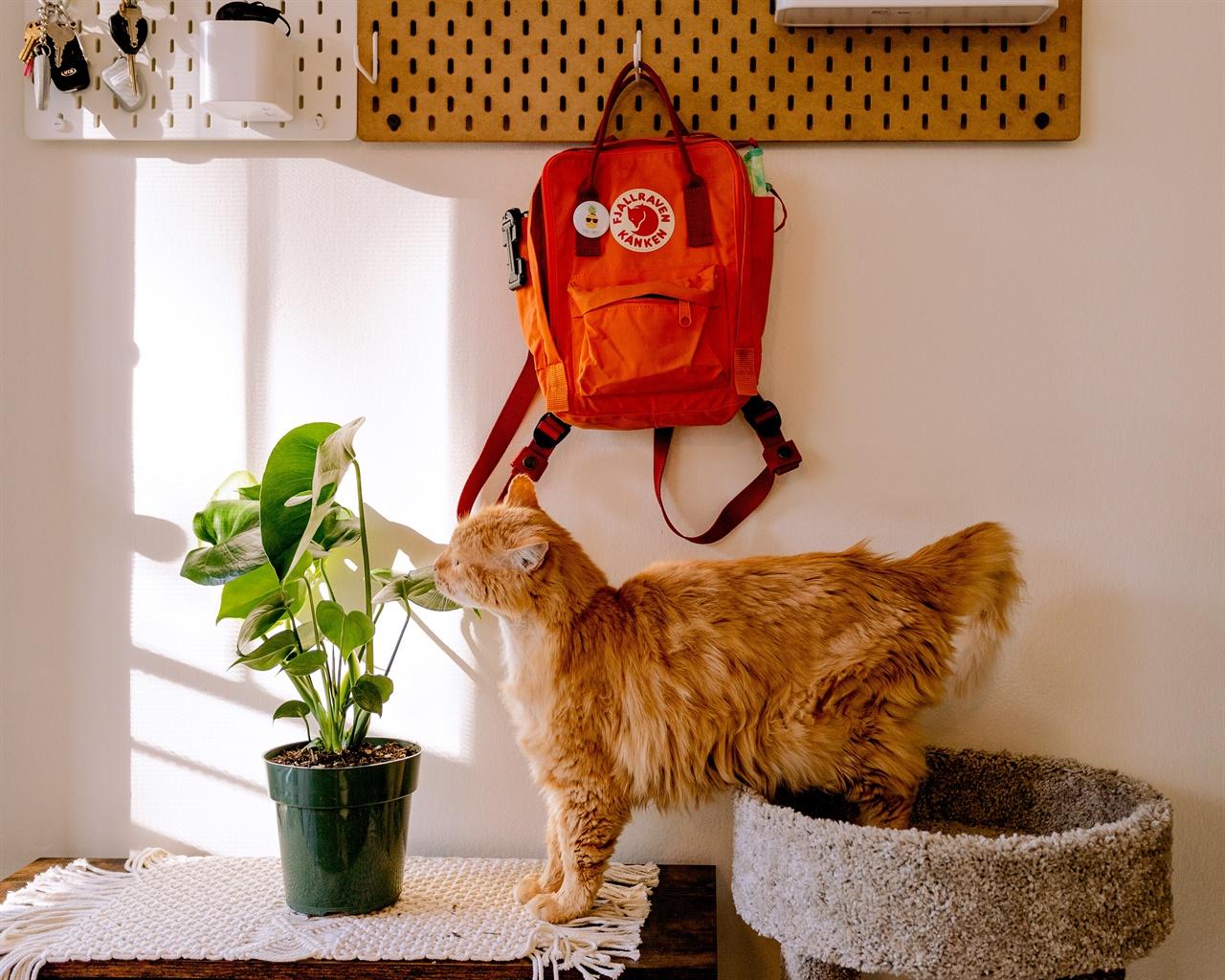자신의 영역 안에 있을 때 안정감을 느끼는 고양이