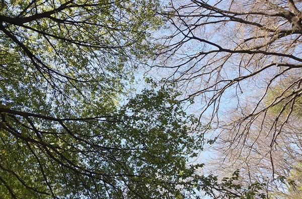 잎도 꽃처럼 피어나는 봄 숲. 2021년 4월 9일 오전 10시 59분 무렵 북한산.