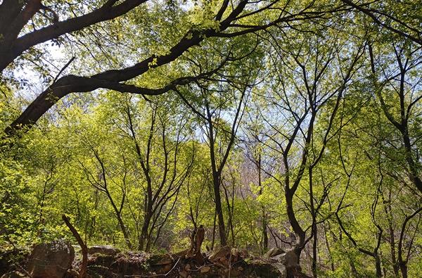 나무마다 다른 줄기와 잎을 보거나 느끼기 가장 좋은 봄 숲. 2021년 4월 9일 오전 10시 59분 무렵 북한산.