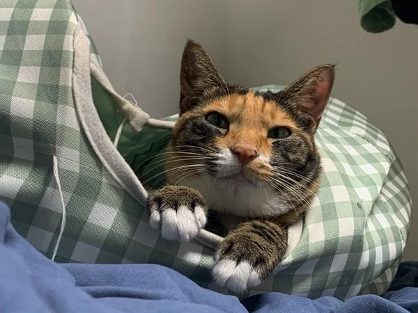 고양이도 자고 일어나면 부어요...