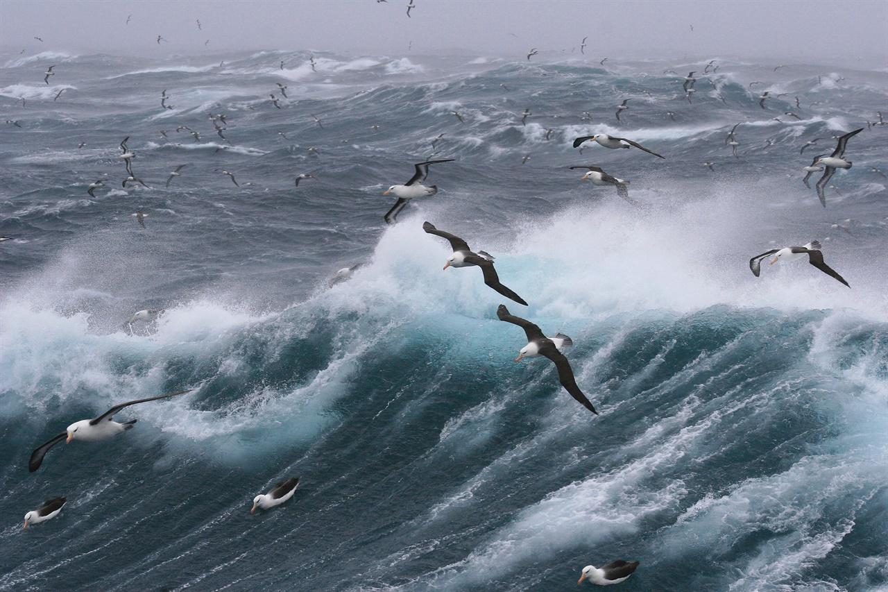 앨버트로스(Albatross) 거친 비바람과 폭풍우가 몰아칠 때야말로 앨버트로스가 창공을 가르며 멋지게 비상할 기회다.