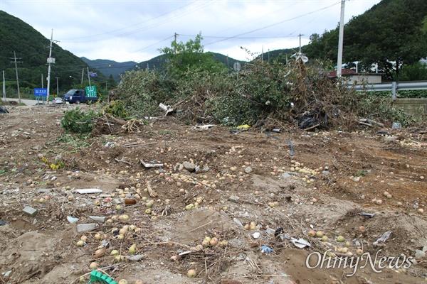 지난달 24일 태풍 '오마이스'의 영향으로 집중호우가 내린 경북 포항시 죽장면 현내리의 한 사과밭, 계곡의 물이 넘치면서 사과나무가 뽑혀나가거나 넘어져 쑥대밭이 됐다.