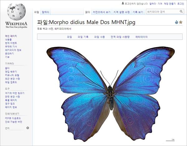 Structural Color, Morpho, Papillon