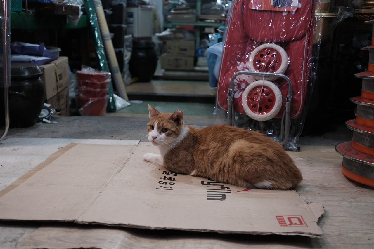 통인시장 고양이