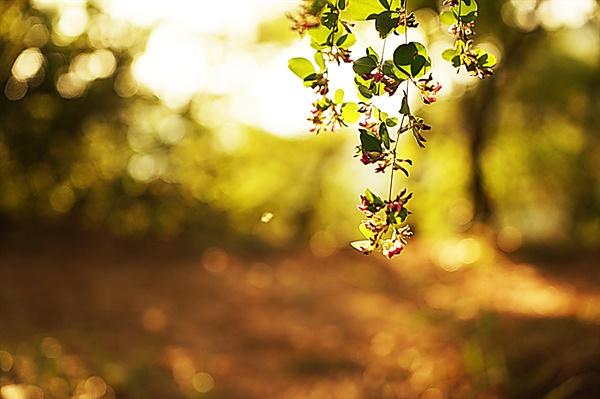 탕춘대 성곽길에서 만난 싸리나무꽃