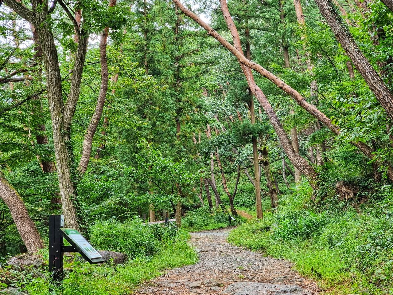 가을비에 촉촉하게 젖은 소나무숲길