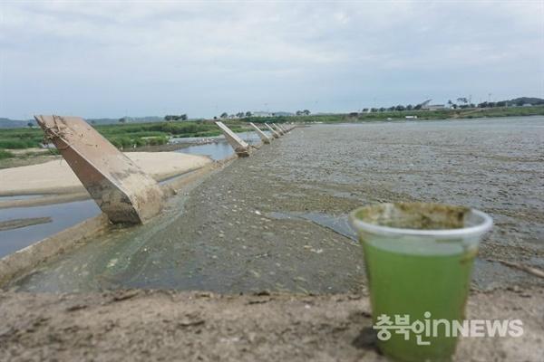 2016년 8월 미호천 작천보 모습. 녹조가 창궐하고 쓰레기와 부유물로 뒤덮여 있다.