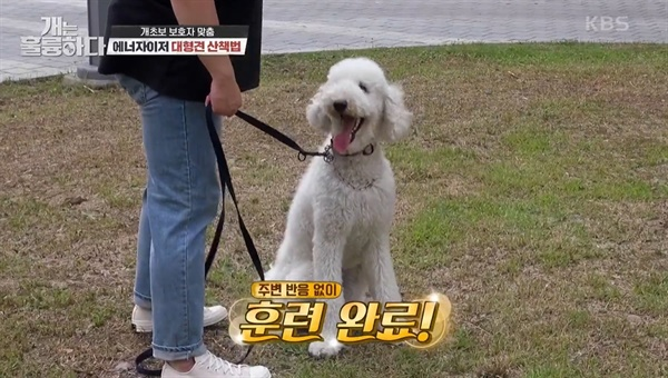 KBS2 <개는 훌륭하다>의 한 장면.