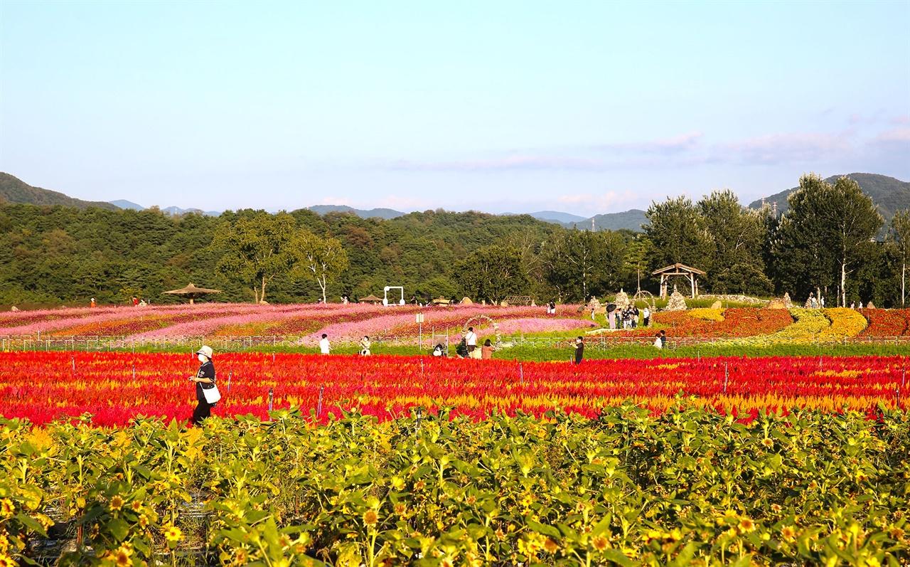 철원 지질명소 고석정 인근에 조성된 고석정 꽃밭