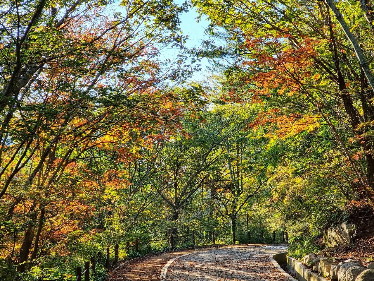 가을빛으로 물들어가는 노고단 탐방로