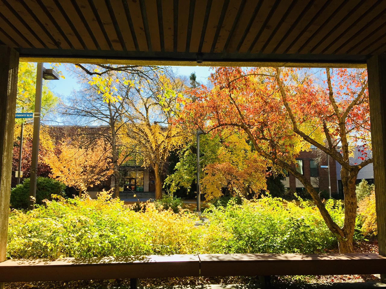 캐나다 에드먼턴의 가을